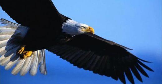 Fábula dos patos que sonham ser águias