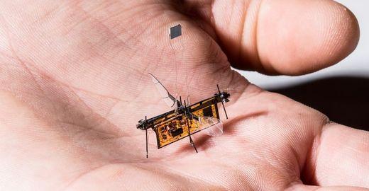 Isso é muito Black Mirror: robô inseto já é uma realidade